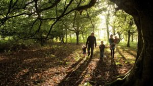 Quince Honey Farm is a fantastic family attraction to visit when you are staying with Hill Farm Cottages, North Devon.